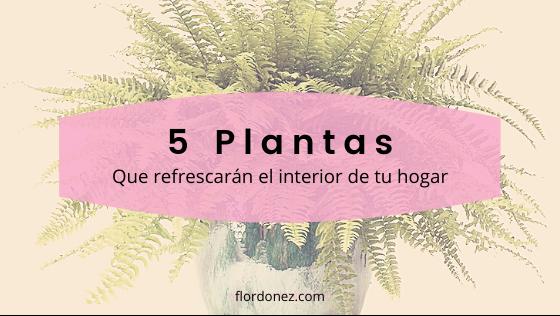 5 Plantas que absorben el calor de tu casa